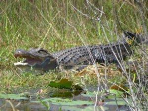 Okefenokee Swamp, Southeast Georgia travel, National Wildlife Refuge