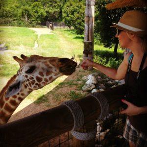 Kristi feeding giraffe at Jacksonville Zoo and Gardens.