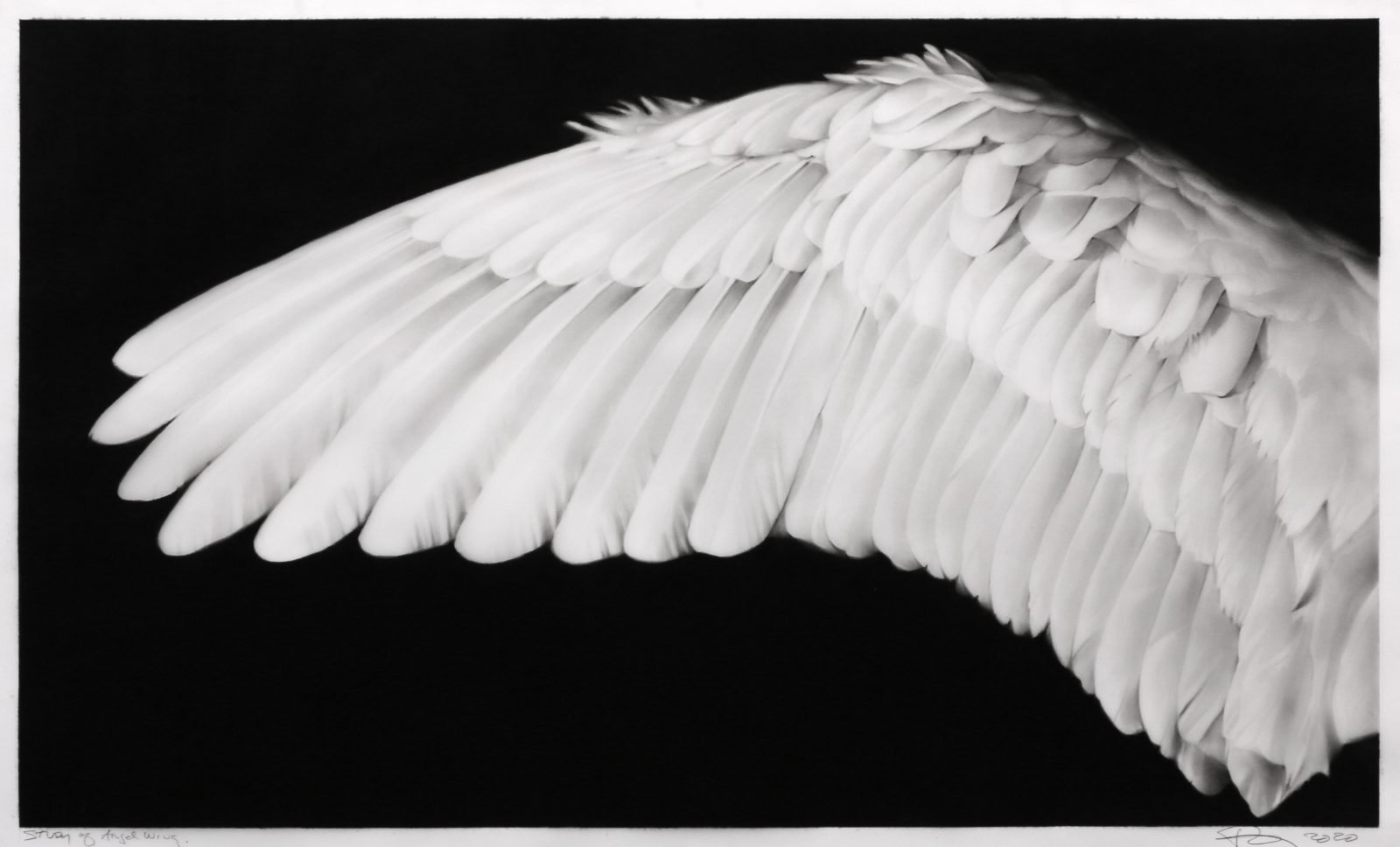 Image: Robert Longo, Study of Angel Wing, 2020. Ink and charcoal on vellum. Courtesy the artist and Metro Pictures, New York.